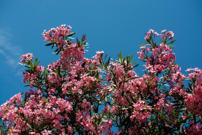 Nahaufnahme von rosa Blumen an einem sonnigen Tag Romantische und schöne Anlage stockfotografie
