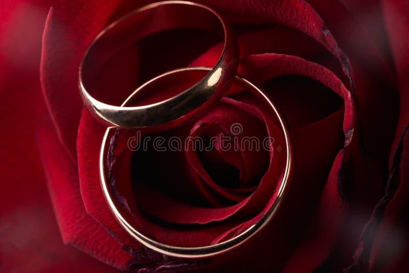 Nahaufnahme von rosafarbenen Blumenblättern des Innereangebotrosas mit Hochzeitsgoldring lizenzfreie stockbilder