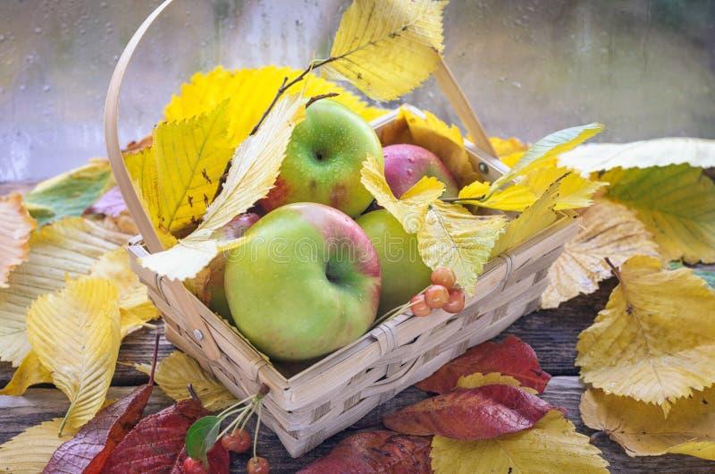 Nahaufnahme von roten Äpfeln mit Herbstlaub im Weidenkorb gegen weißen Hintergrund stockfoto