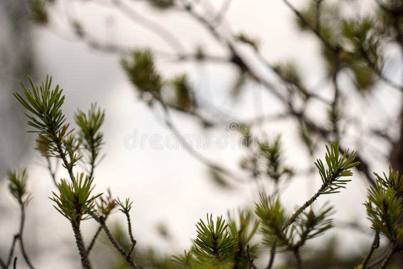 Nahaufnahme von schönen Grünpflanzen mit Unschärfehintergrund lizenzfreie stockfotos