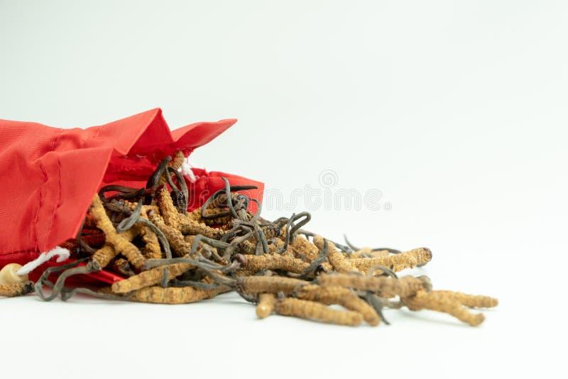 Nahaufnahme von sinensis oder Pilz Ophiocordyceps cordyceps in der roten Stofftasche auf Hintergrund Medizinische Eigenschaften i stockfoto
