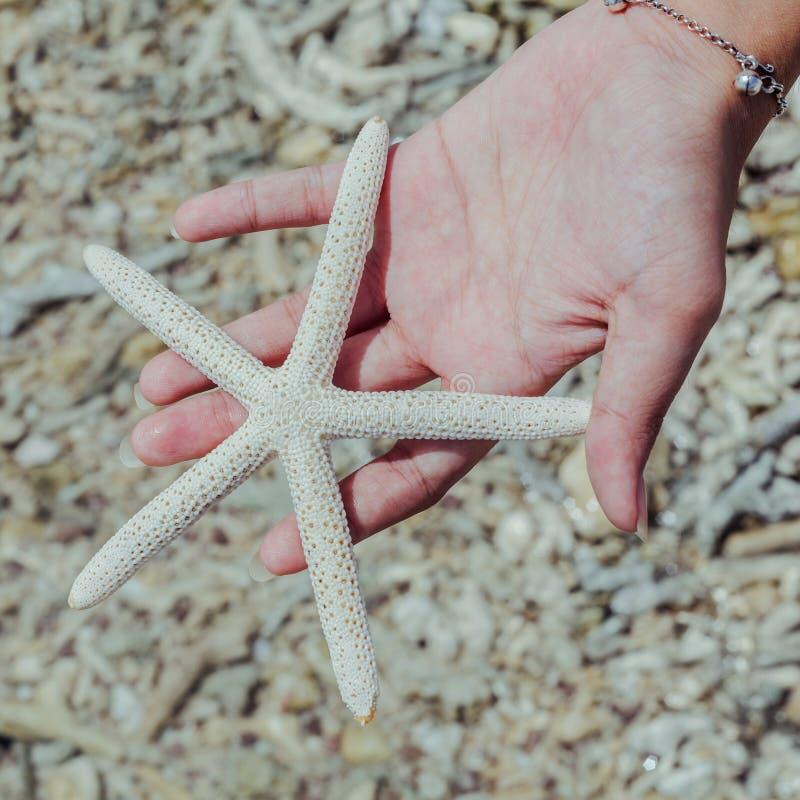 Nahaufnahme von Sternfischen im Mädchen 's-Hand am tropischen Strand reise lizenzfreie stockbilder