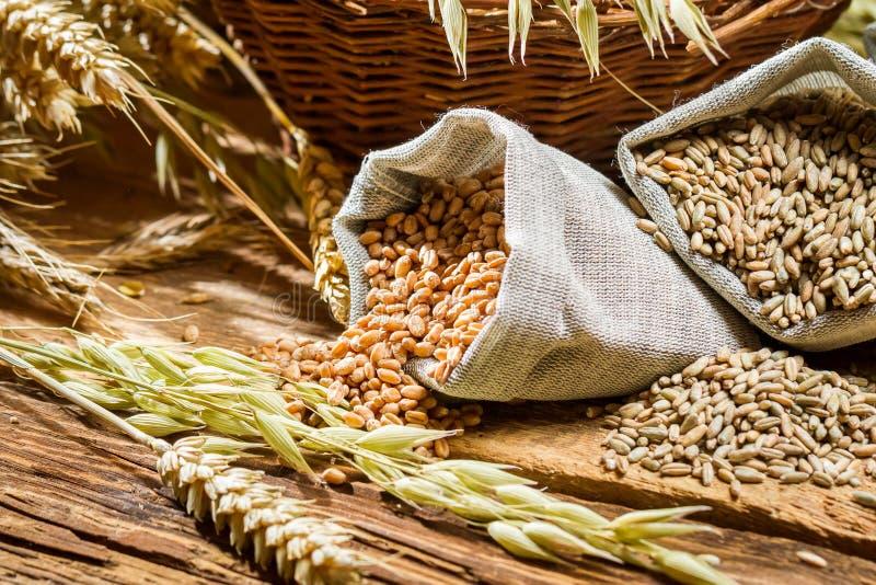 Nahaufnahme von Taschen mit Getreidekörnern lizenzfreie stockfotografie
