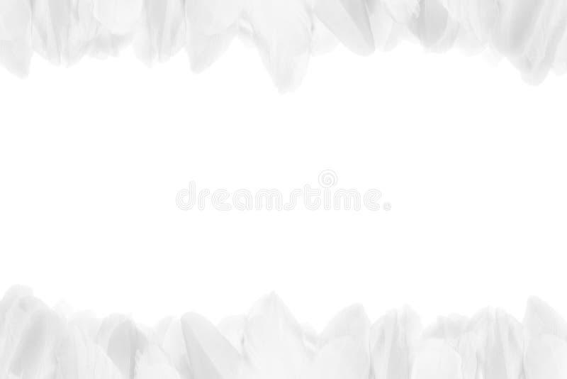 Nahaufnahme von weißen Federn an der Spitze und an der Unterseite des Fotos Horizontaler Rahmen lizenzfreie stockfotos