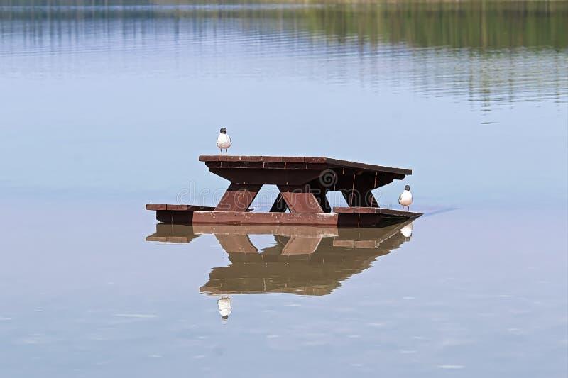 Nahaufnahme von zwei Vögeln, die auf einem Picknicktisch gelegt in Wasser stillstehen lizenzfreie stockbilder