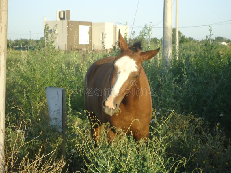 Nahaufnahme zu einem Pferd lizenzfreie stockfotos