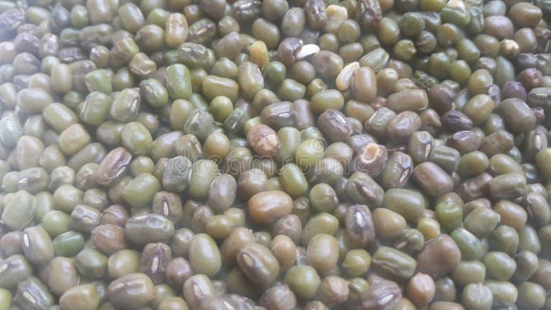 Nahaufnahmeansicht grüner ganzer der Mungobohne oder Mungbohne, des maash oder des moong stockfoto