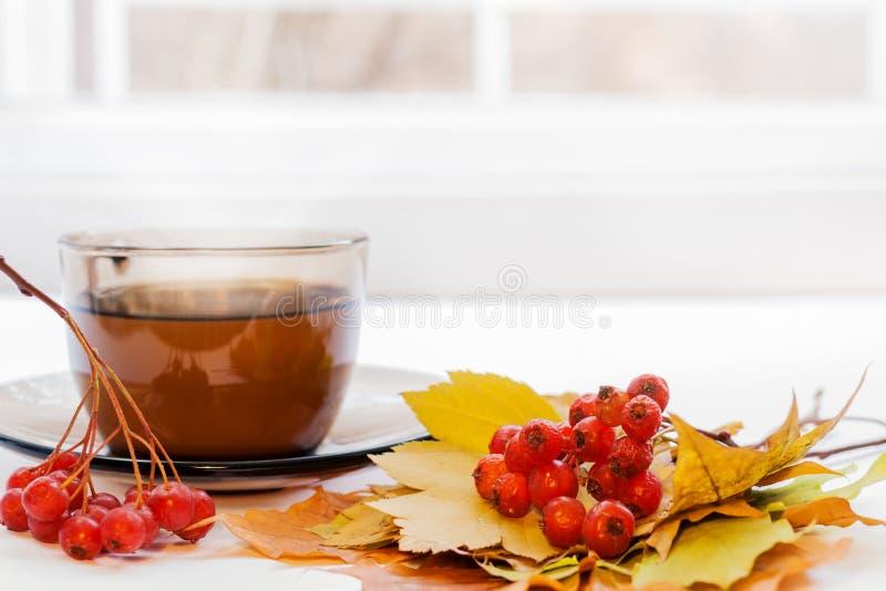 Nahaufnahmebündel von roten reifen Weißdornbeeren und von Tasse Tee auf weißem Fensterbrett nahe Fenster stockfotografie