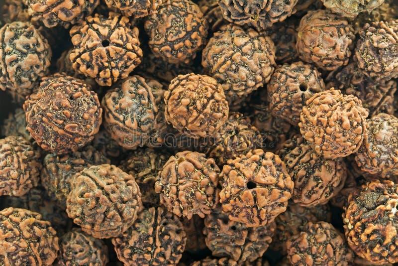 Nahaufnahmebeschaffenheit von Rudraksha erschrak die Samen, die als Gebetsperlen benutzt wurden lizenzfreie stockfotografie