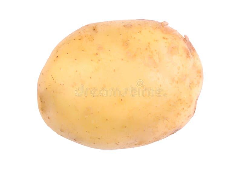Nahaufnahmebild der gesunden, reifen und rohen jungen Kartoffel, lokalisiert auf einem weißen Hintergrund Sommerernte des Gemüses lizenzfreie stockfotografie