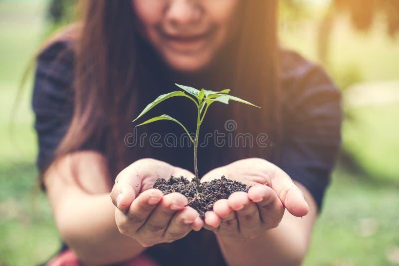 Nahaufnahmebild von Frau ` s übergibt das Halten des Bodens und des kleinen Baums zum Glühen lizenzfreie stockfotos