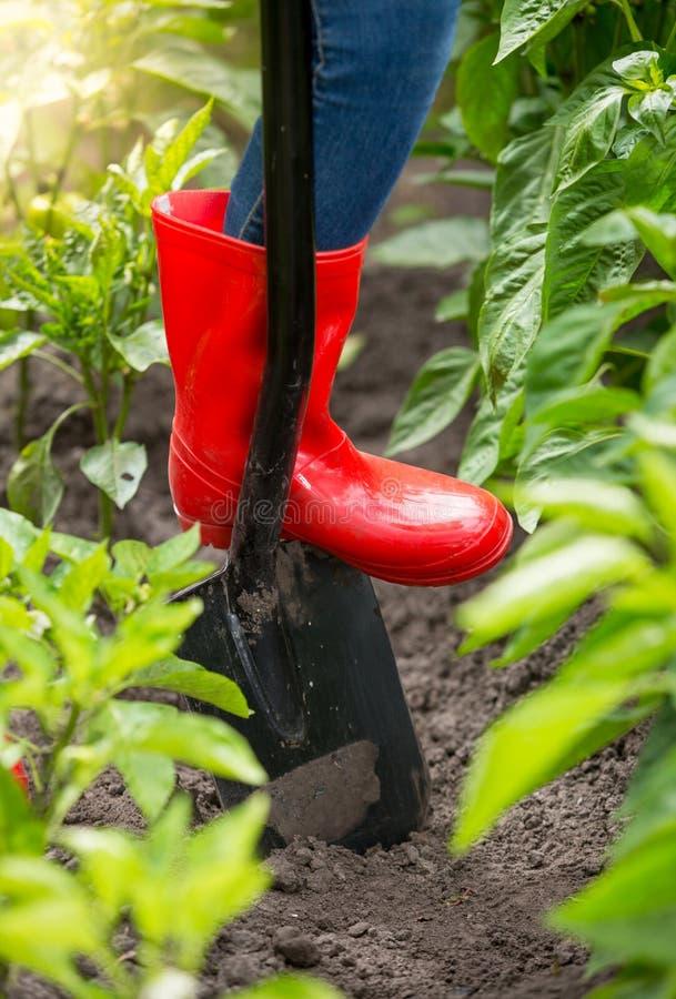 Nahaufnahmebild von Landwirtfüßen im roten Gummistiefel, der auf Schaufel im Garten steht stockfotos
