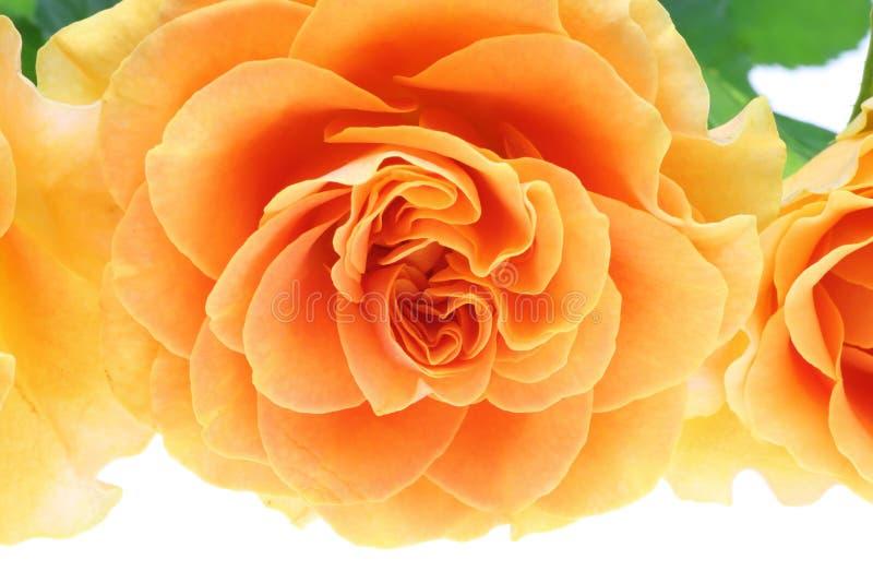 Nahaufnahmebild von orange Rosen lizenzfreie stockbilder