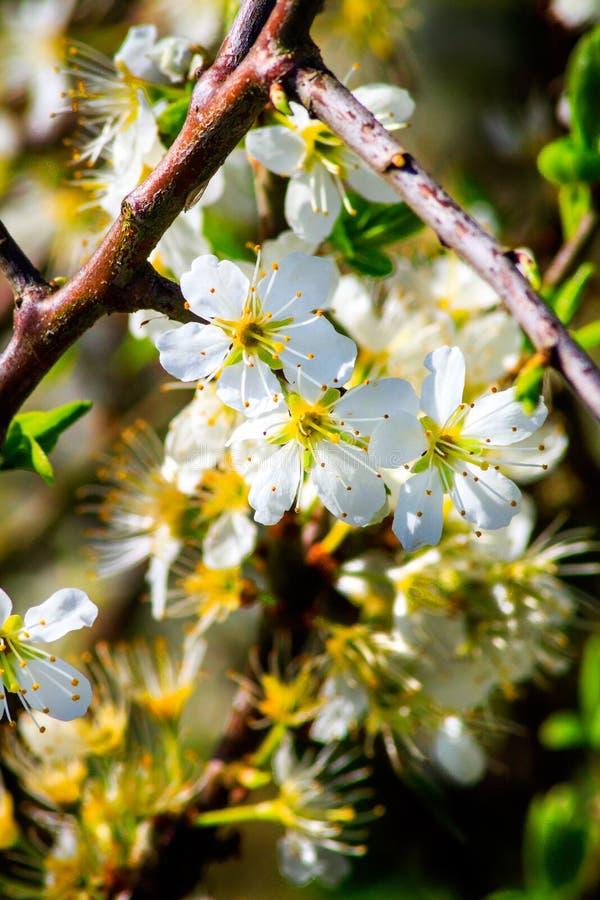 Nahaufnahmeblüte am Park stockfotos