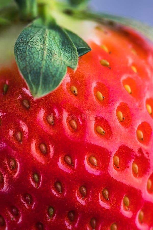 Nahaufnahmedetail einer frischen roten Erdbeere mit Blättern lizenzfreie stockfotos