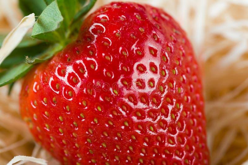 Nahaufnahmedetail einer frischen roten Erdbeere mit Blättern stockfotografie
