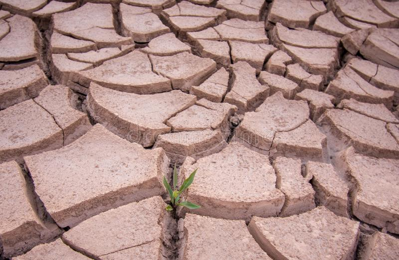 Nahaufnahmefotos des trockenen Bodens lizenzfreie stockfotografie