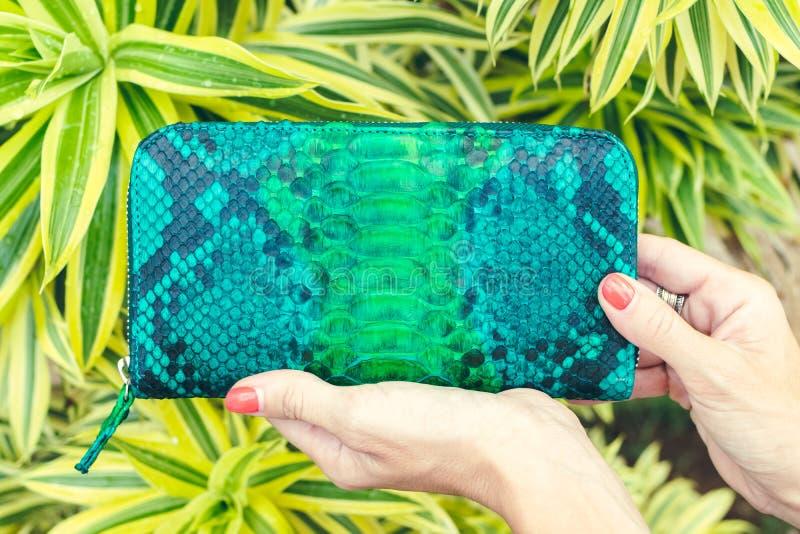 Nahaufnahmefrauenhände mit Mode Luxus-snakeskin Pythonschlangengeldbörse Draußen Bali-Insel lizenzfreies stockbild