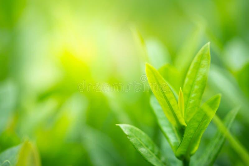 Nahaufnahmegrünblatt auf unscharfem Hintergrund unter Sonnenlicht im selektiven Fokus lizenzfreie stockbilder