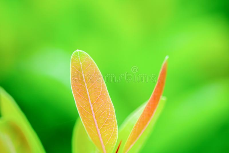 Nahaufnahmenaturansicht des Babygrünblattes stockbild