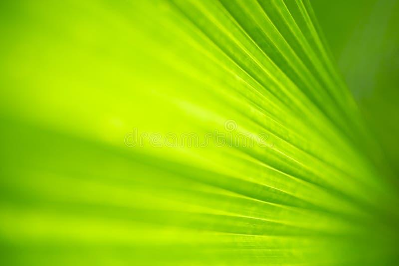 Nahaufnahmenaturansicht des grünen Blattes und des unscharfen Grünhintergrundes im Garten mit Kopienraum für Text mit als Hinterg lizenzfreie stockfotografie