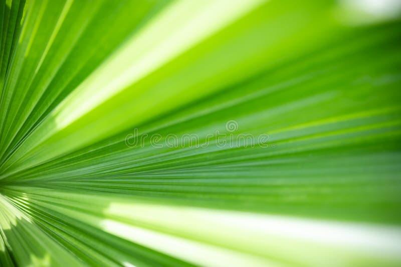 Nahaufnahmenaturansicht des grünen Blattes und des unscharfen Grünhintergrundes im Garten mit Kopienraum für Text mit als Hinterg stockbild