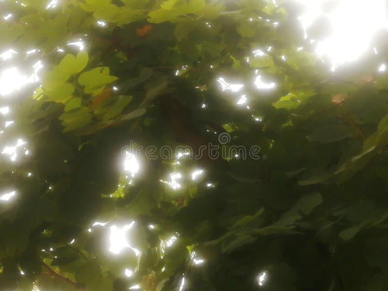 Nahaufnahmenaturansicht des grünen Blatthintergrundes lizenzfreie stockbilder