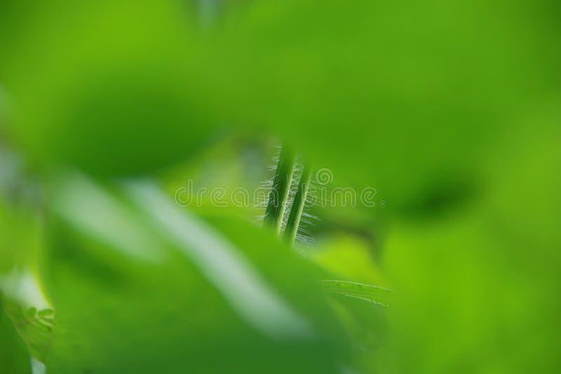 Nahaufnahmenaturansicht des gr?nen Blattes im Garten am Sommer unter Sonnenlicht stockfotografie