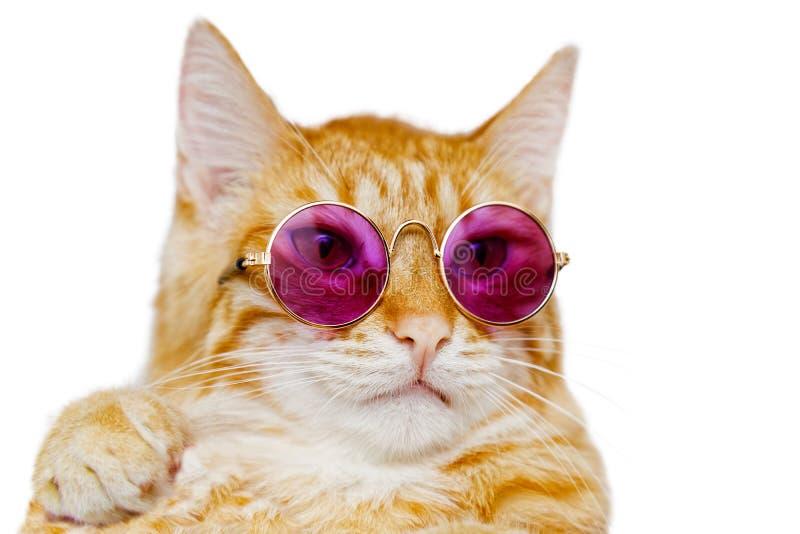 Nahaufnahmeporträt der lustigen Ingwerkatze, die farbige Gläser trägt stockfotos