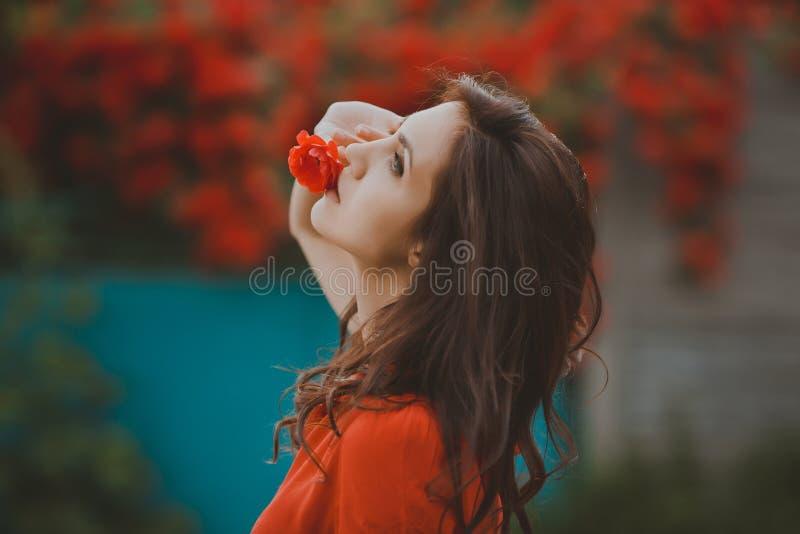 Nahaufnahmeporträt der schönen Brunettefrau mit Rotrose in ihren Lippen Getontes Bild stockbilder