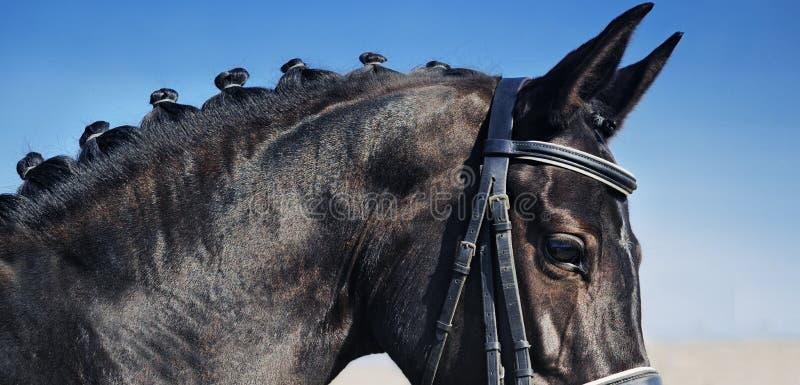 Nahaufnahmeporträt des Dressurreitenpferds mit der umsponnenen Mähne stockfoto