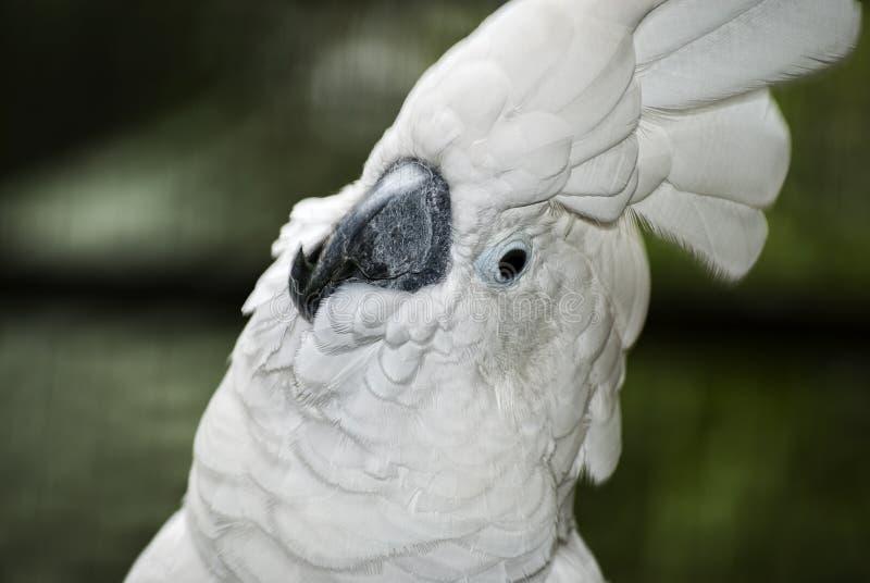 Nahaufnahmeporträt des Papageien stockfotos