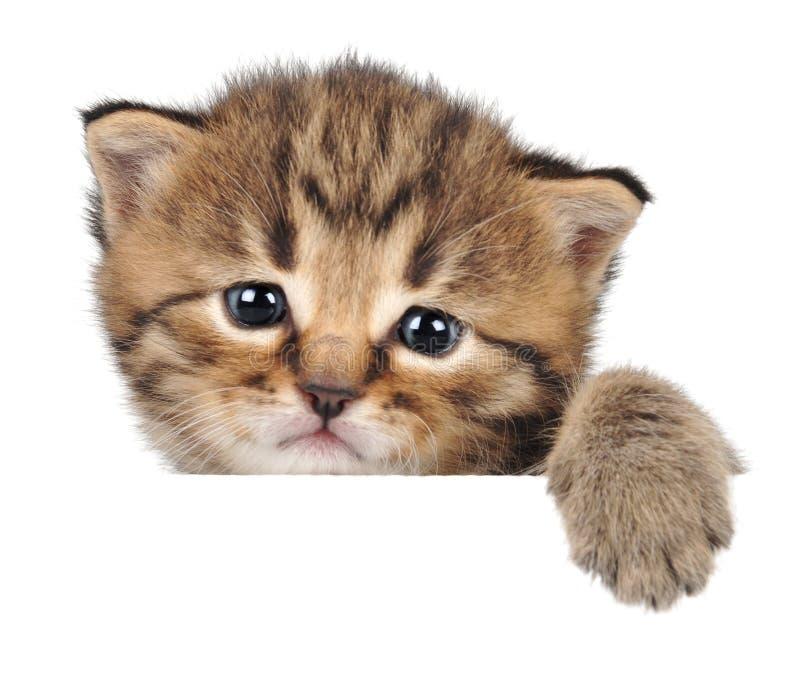 Nahaufnahmeporträt eines sehr kleinen Kätzchens stockbild