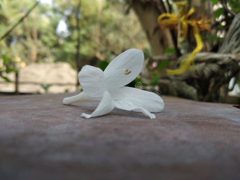 Nahaufnahmeschüsse einer Blume stockfoto