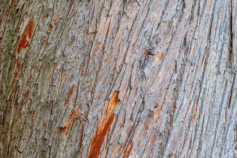 Nahe Ansicht der Baumrinde lizenzfreie stockfotos