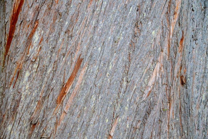 Nahe Ansicht der Baumrinde stockfotos