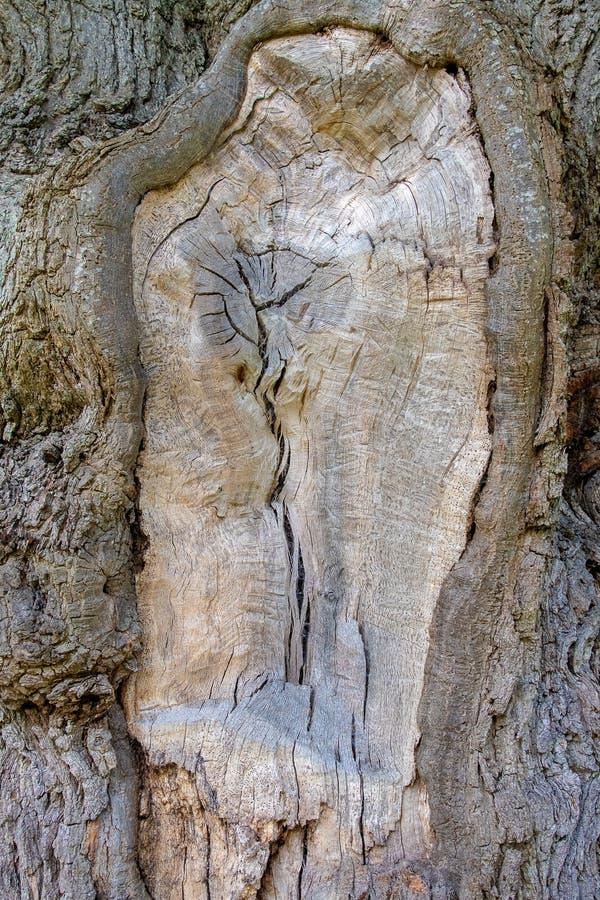 Nahe Ansicht eines Baumstammes stockfotografie