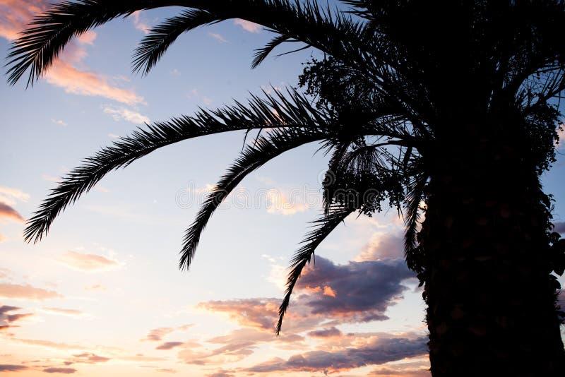 Nahe Ansicht von dunklen Formen der Palme stockfotografie