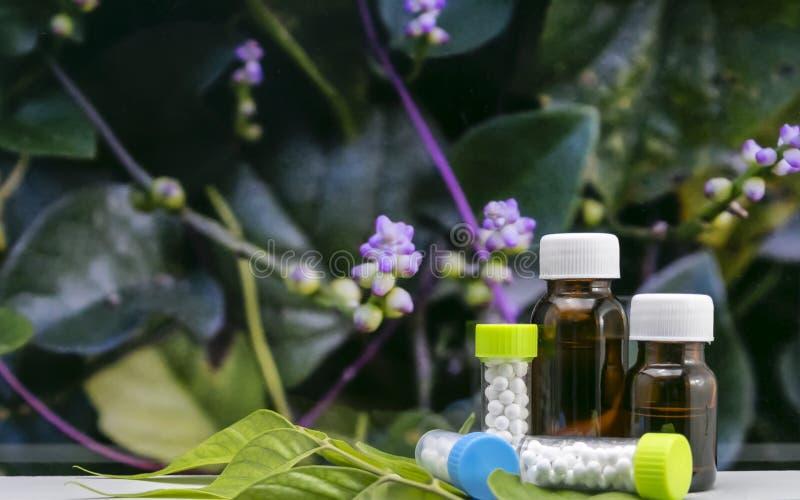 Nahe Ansicht von flüssigen Flaschen der homöopathischen Medizin und von Kügelchenzuckerballpillen mit wilder Blume und grünem Bla stockfotos