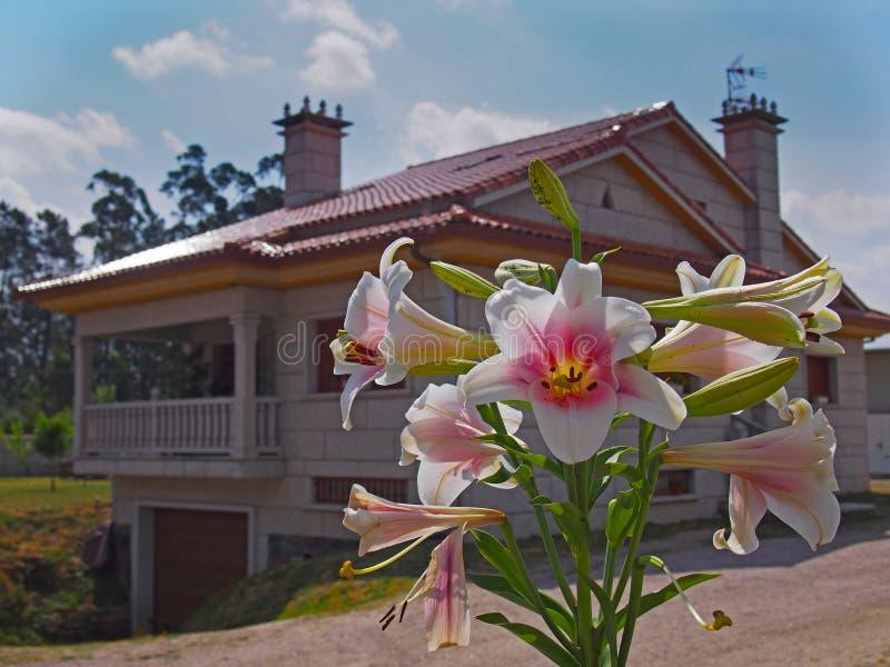 Nahe Ansicht von stieg lilly mit Landhaus am Hintergrund stockfotos