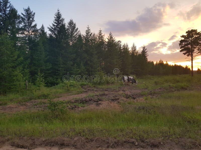Nahe dem Wald im Dorf stockbild