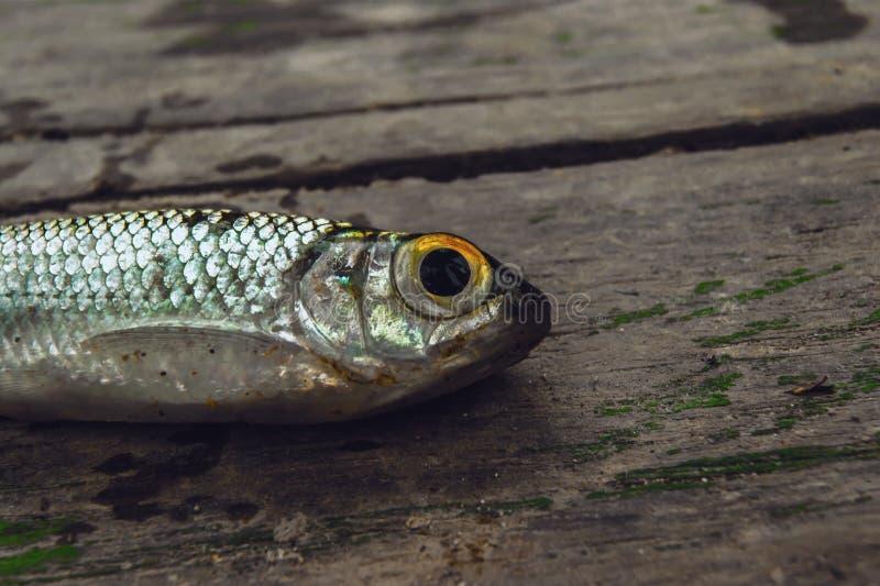 Nahe Fische stockfoto