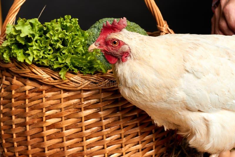 Nahe hohe Ansicht der Hennenstellung nahe Weidenkorb voll des Kopfsalates und des Brokkolis lizenzfreie stockfotos