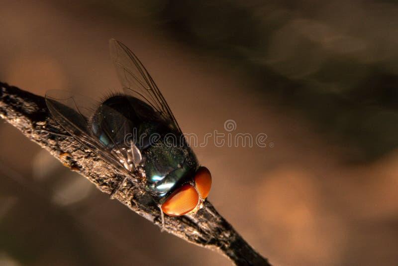 nahe hohe Fliege auf dem schmutzigen Seil innerhalb des Hauses auf der R?ckseite des bokeh lizenzfreie stockfotos
