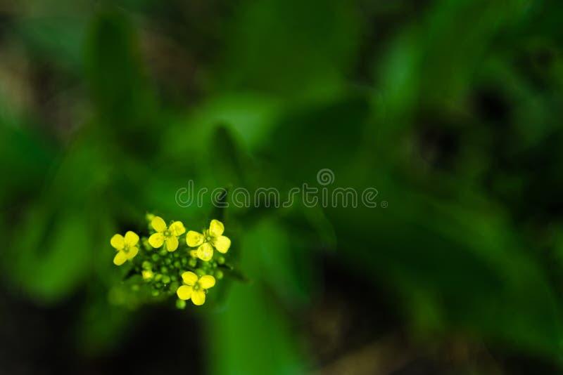 Nahe oben gelbe Blume auf einem unscharfen Hintergrund von grünen Blättern im Garten Ansicht zu blühender Blüte in der Sommerzeit stockfoto