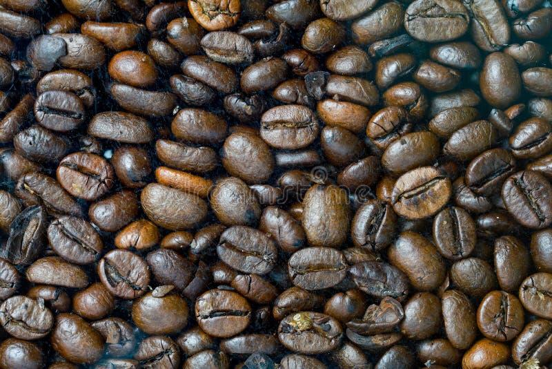 Naher hoher Kaffeesamen für Hintergrund und Muster lizenzfreies stockbild