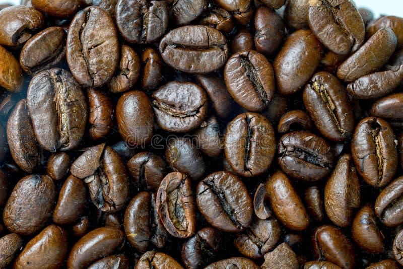 Naher hoher Kaffeesamen für Hintergrund und Muster stockbilder