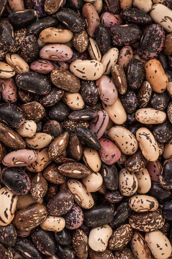 Naher hoher Mischungsbohnenhintergrund, Mischungsbohnensamen Startwert für Zufallsgeneratoransammlung Gesunde Nahrung stockfoto