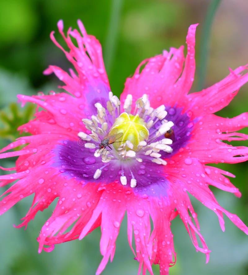 Nahes hohes der Blume stockfotos