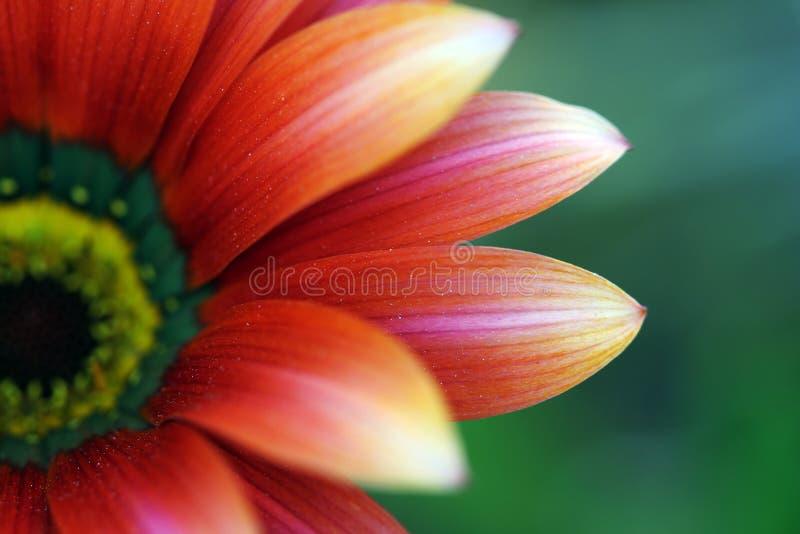 Nahes hohes der Blume lizenzfreie stockfotografie